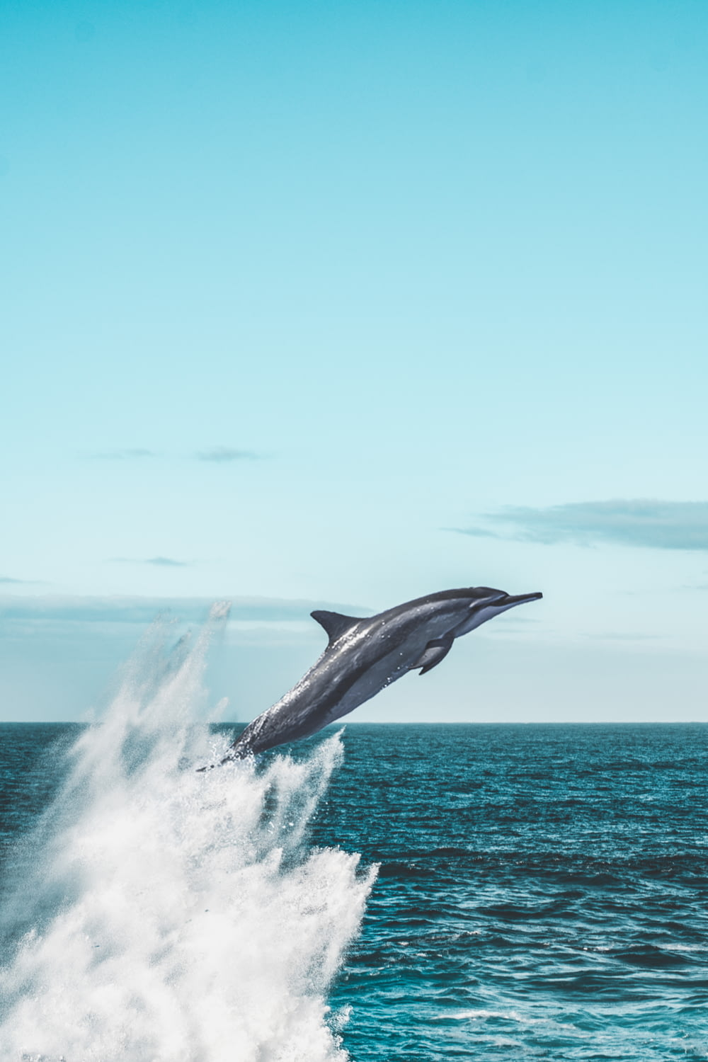 dolphin jumping on sea during daytime