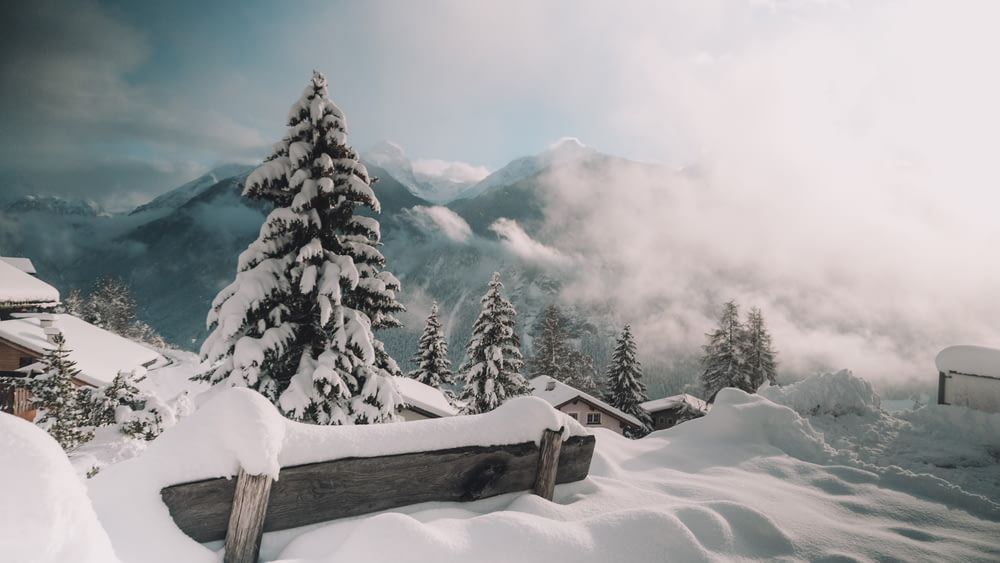 snow covered mountains and trees during daytime