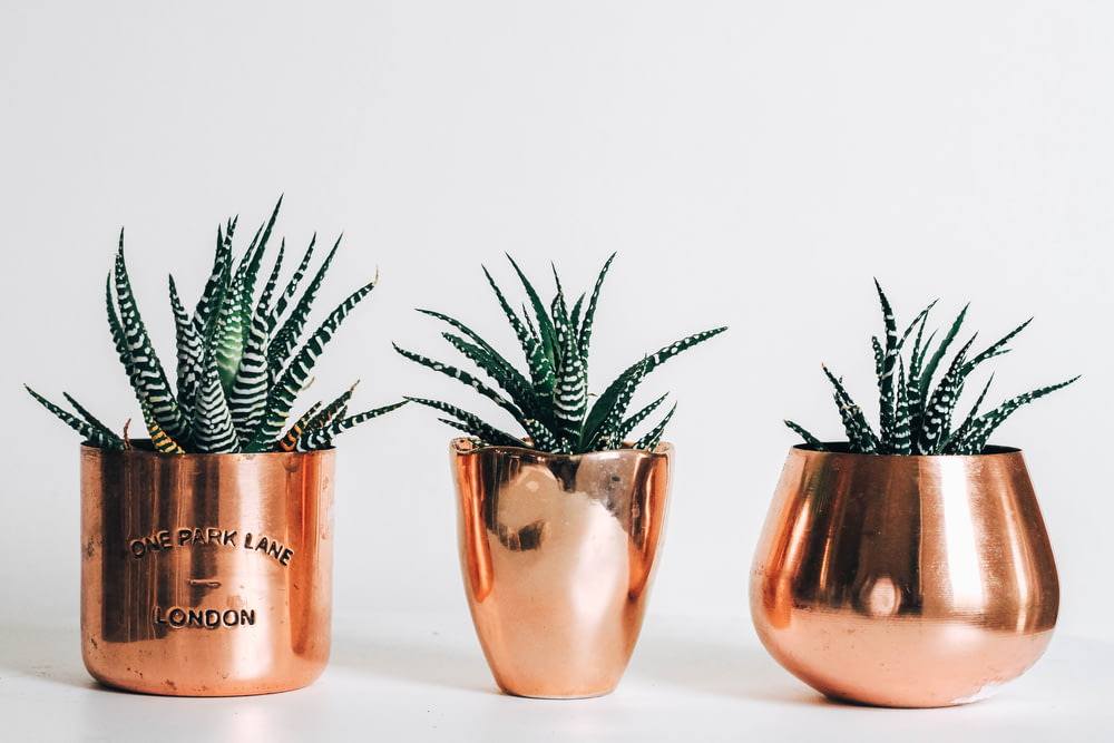three gold pots with plants beside wall