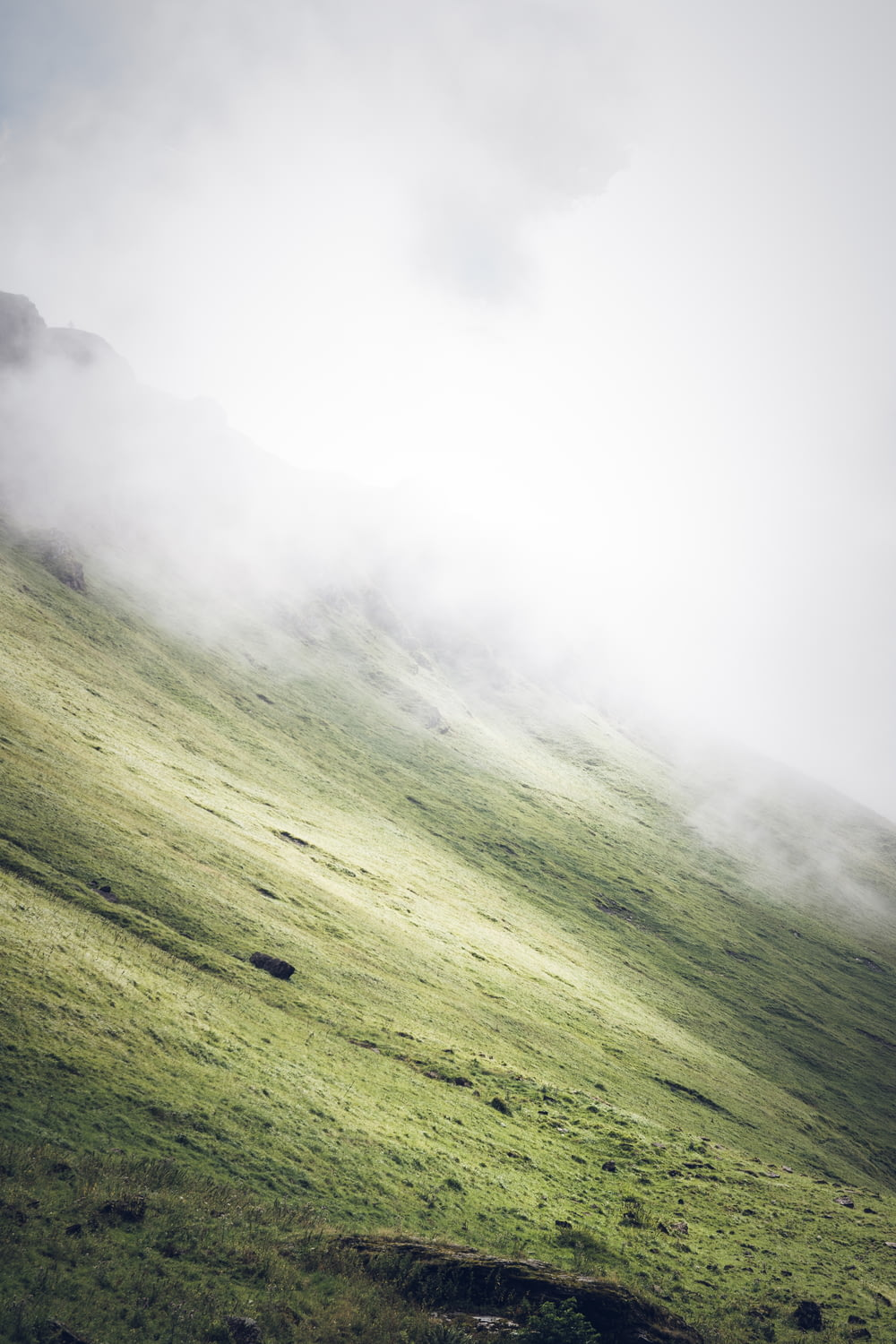 grass covered slope during foggy weather