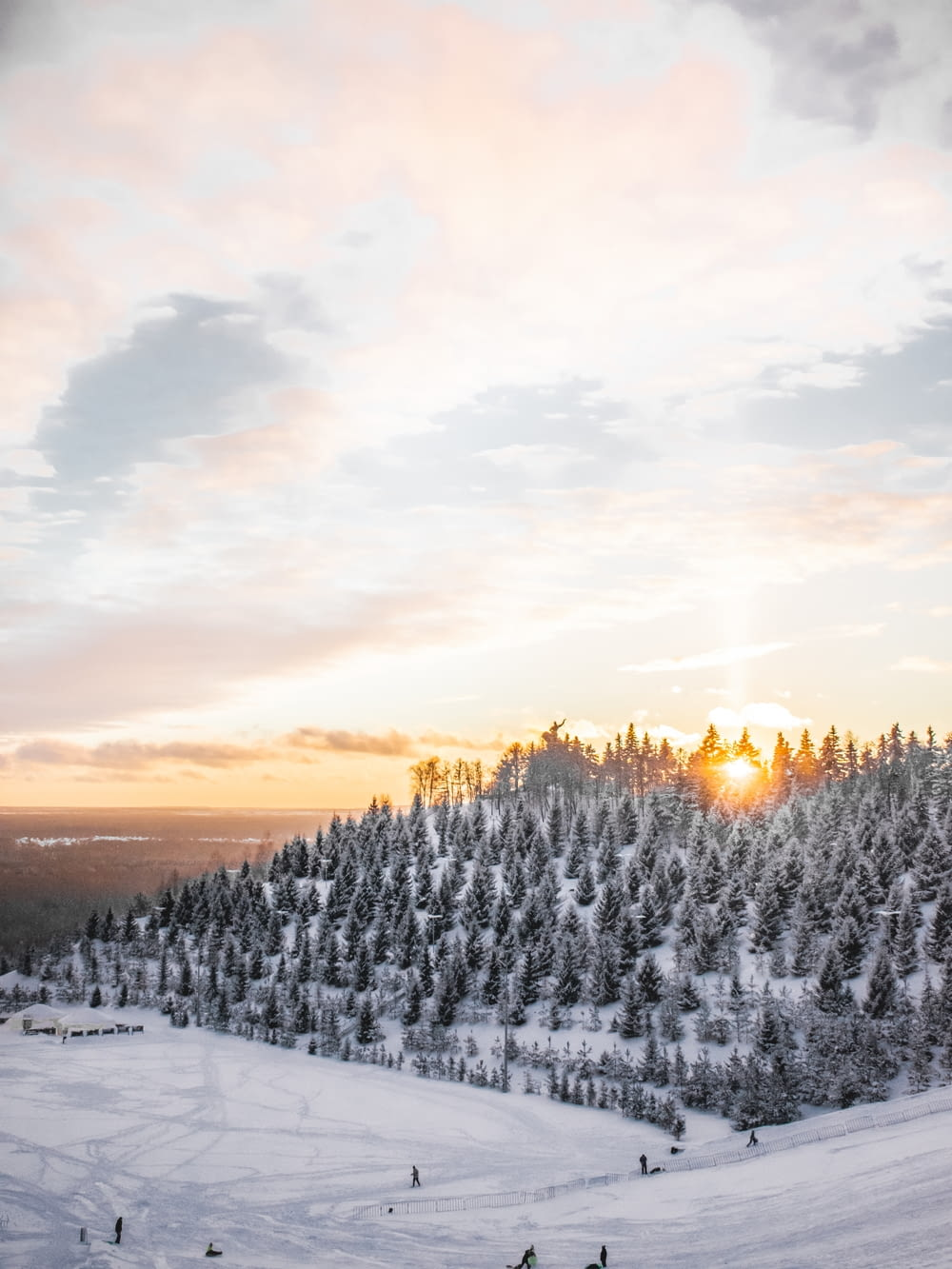 aerial photography of trees covered with snow