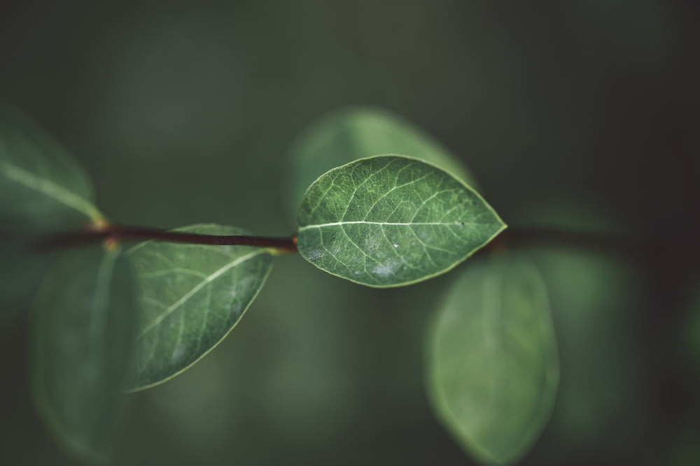 green leafed plant shallow focus photography