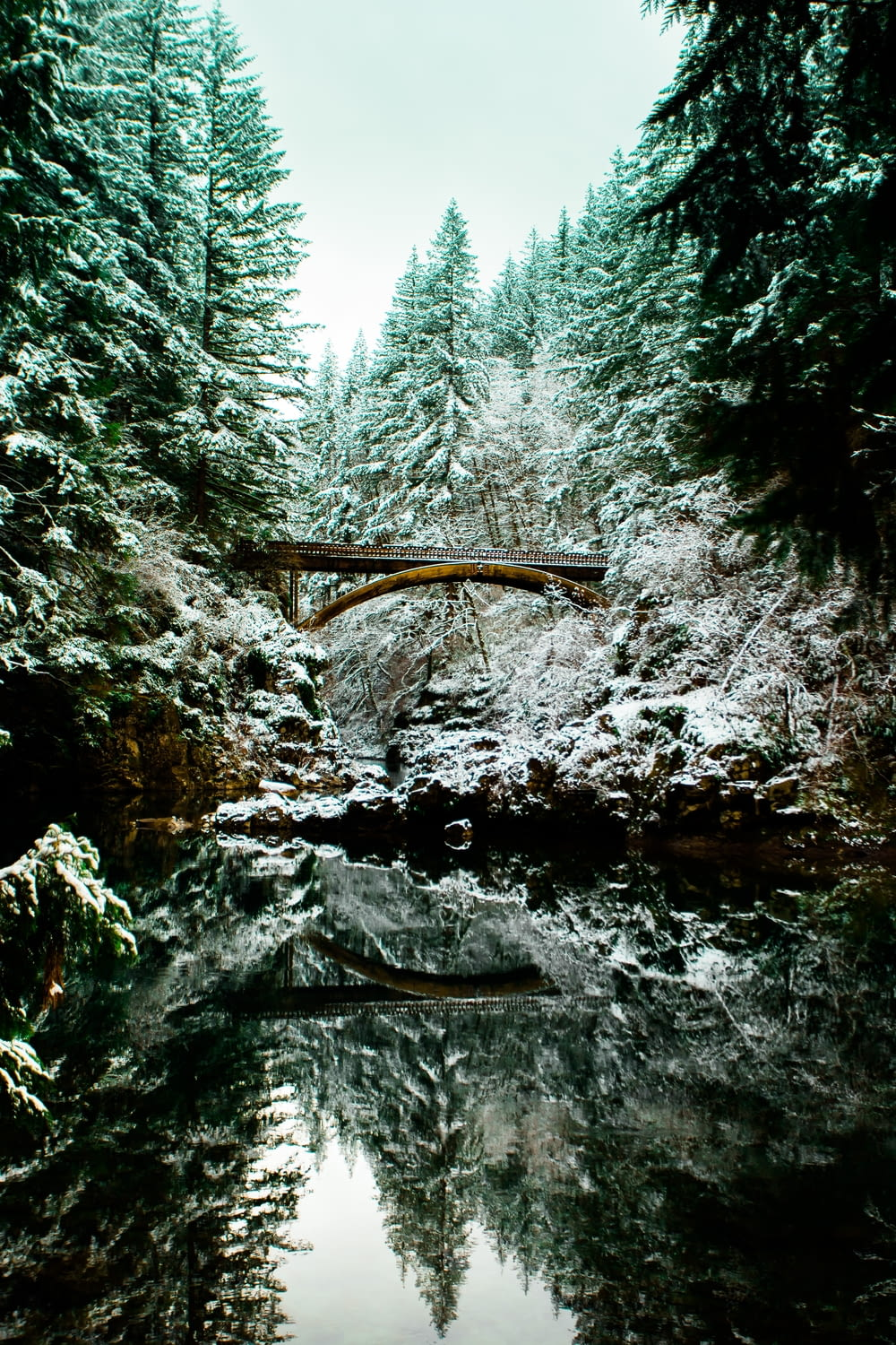 bridge on body of water between pine trees low-angle photography