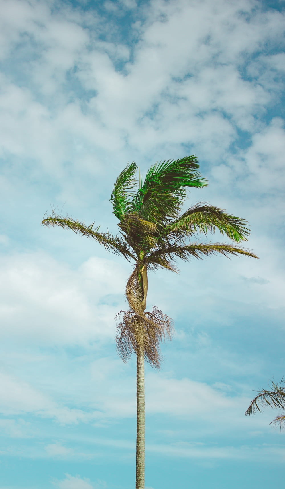 wind blowing on green coconut tree during daytime