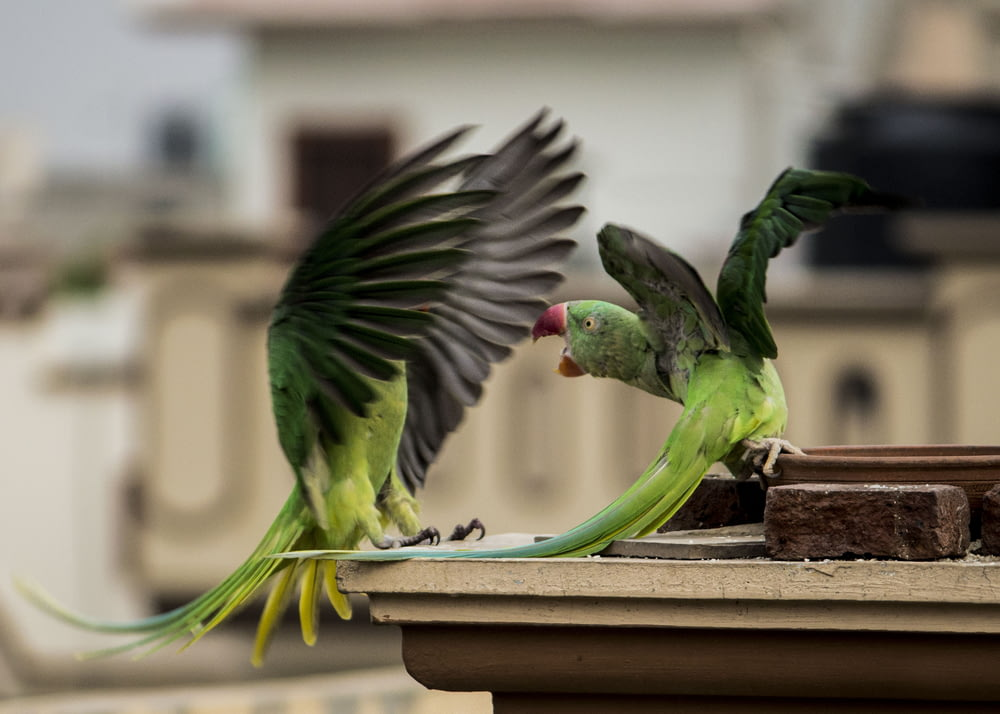 selective focus photography of two green macaws during daytime