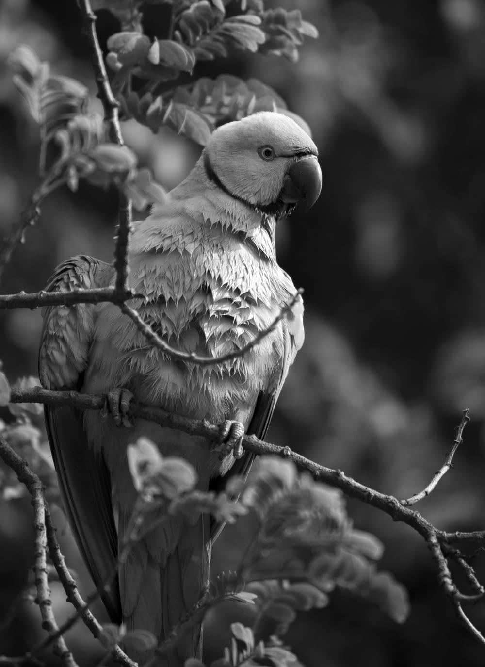 grayscale photo of bird perch on branch of tree