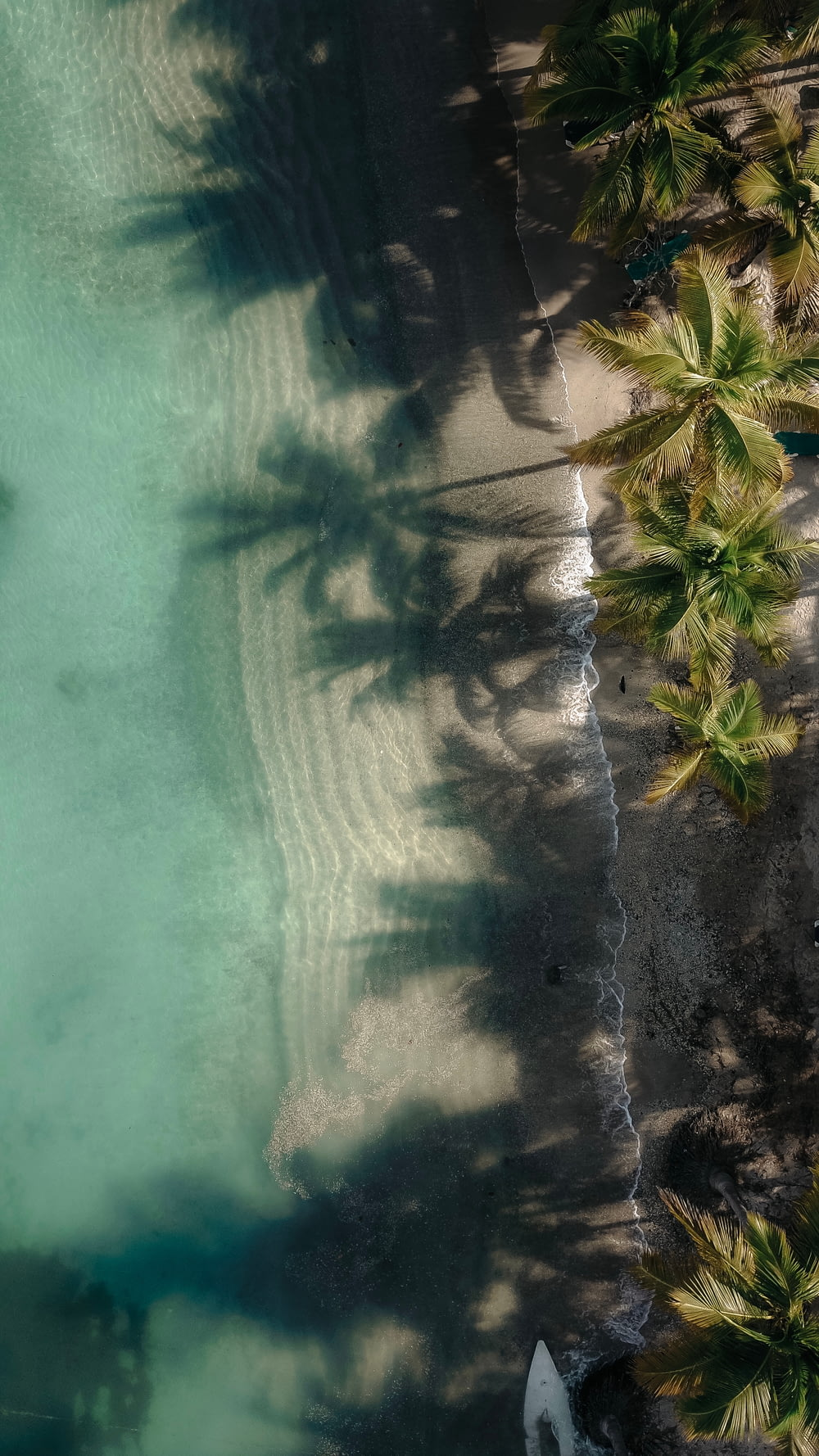 aerial photography of green coconut palm trees near body of water