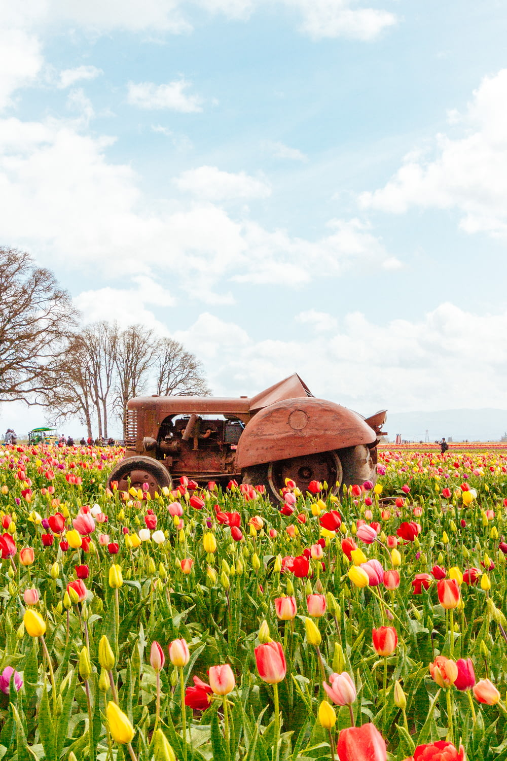 tractor on tulips field