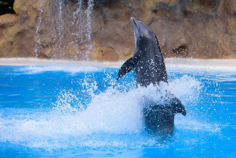 black dolphin on blue body of water
