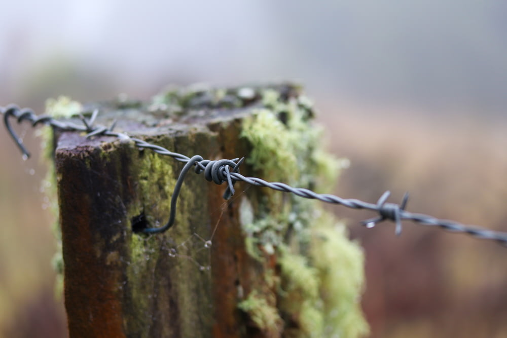 selective photography of barbwire during daytime
