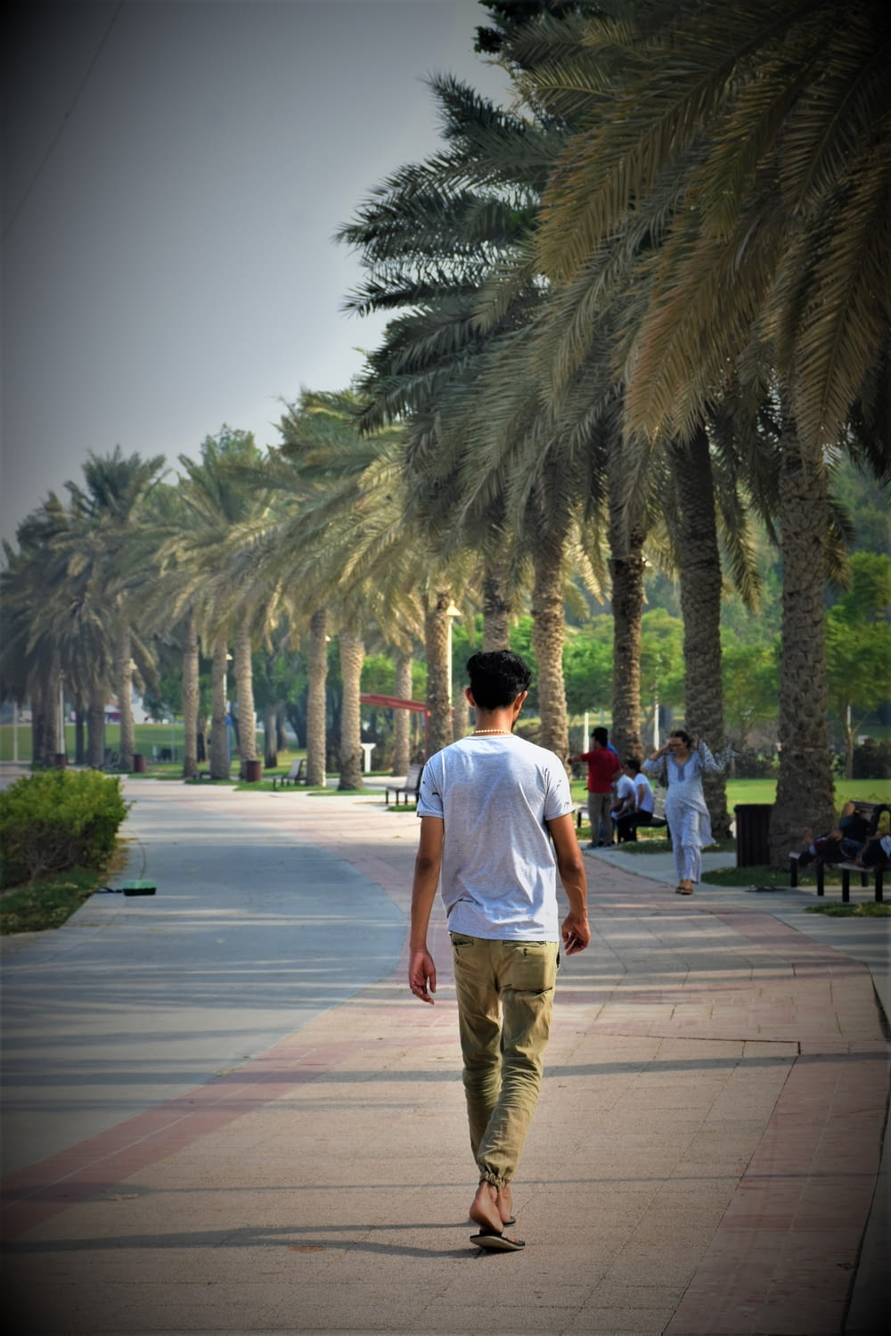man walking in palm trees lined pathway