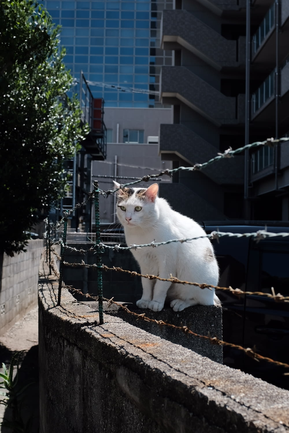 cat sitting in front of barbed wire