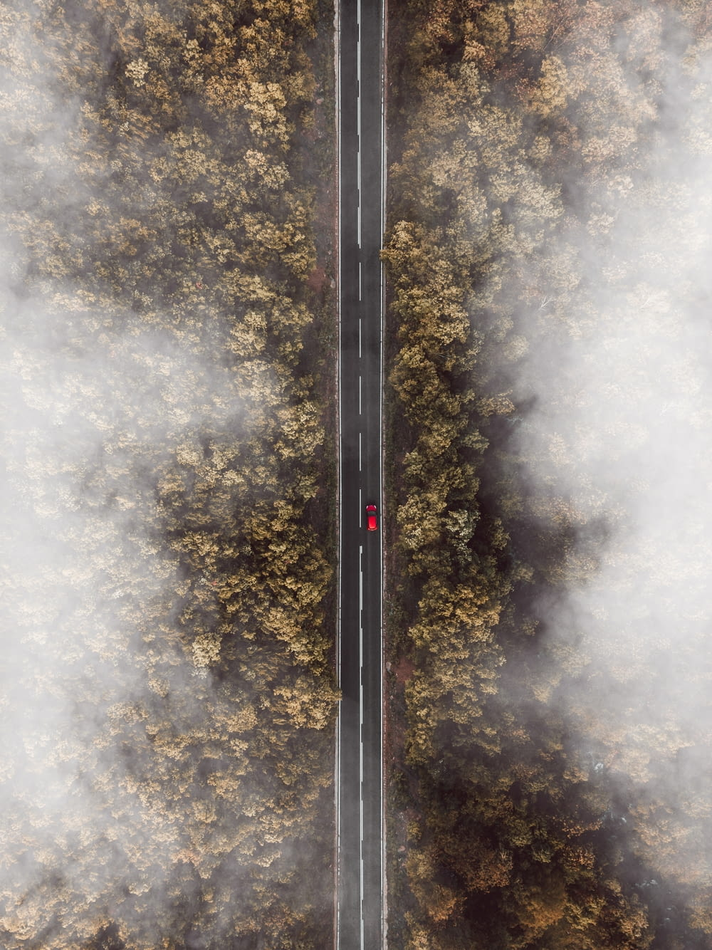 bird's-eye view photo of road besides forest
