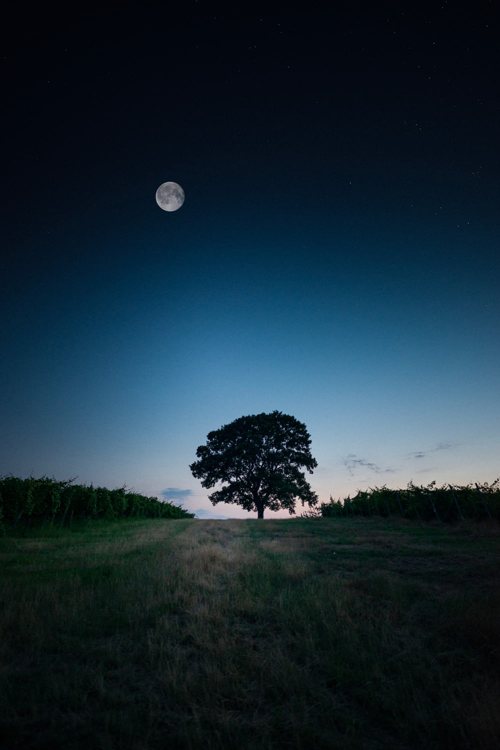 tree on grass near plant field during night