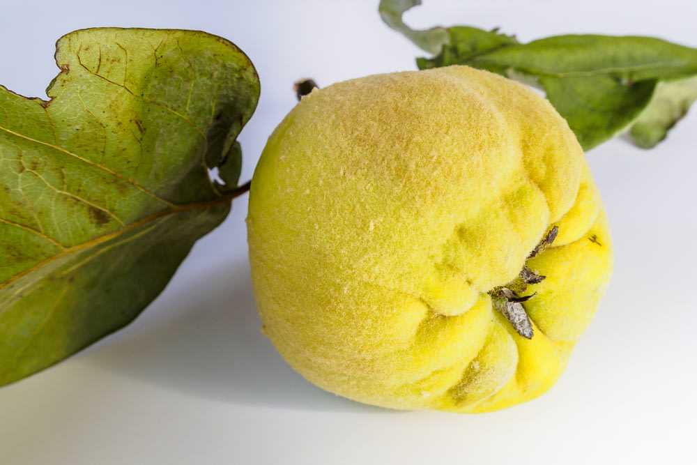 round yellow fruit