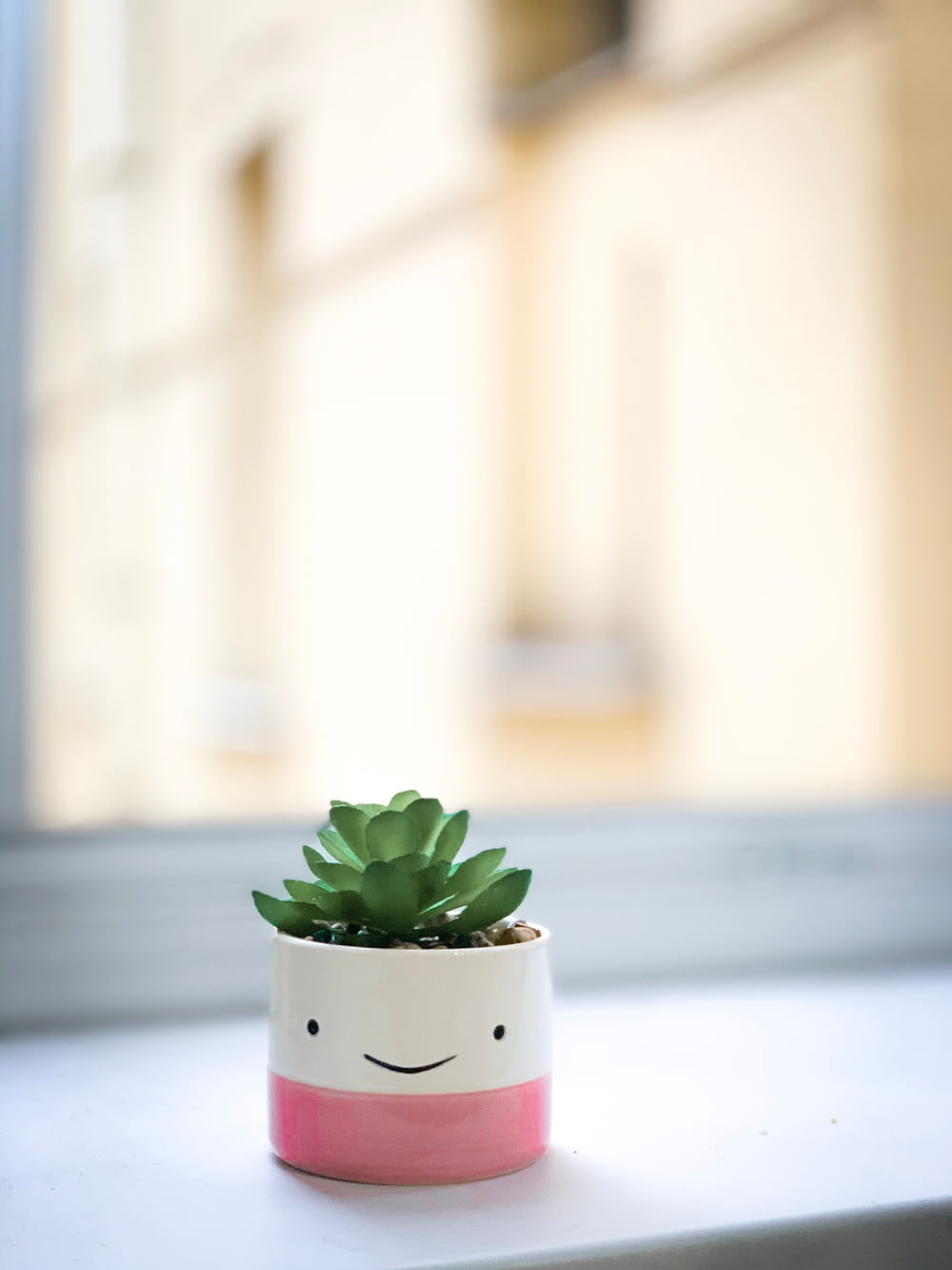green succulent on white and pink pot