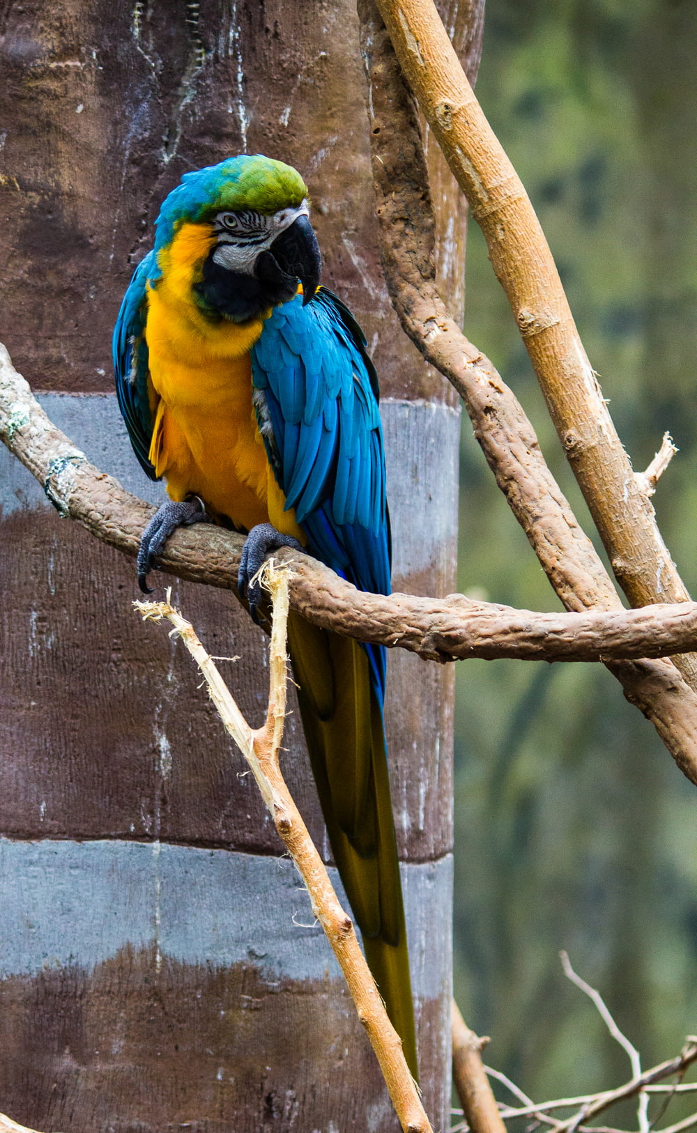 blue, yellow, and green macaw