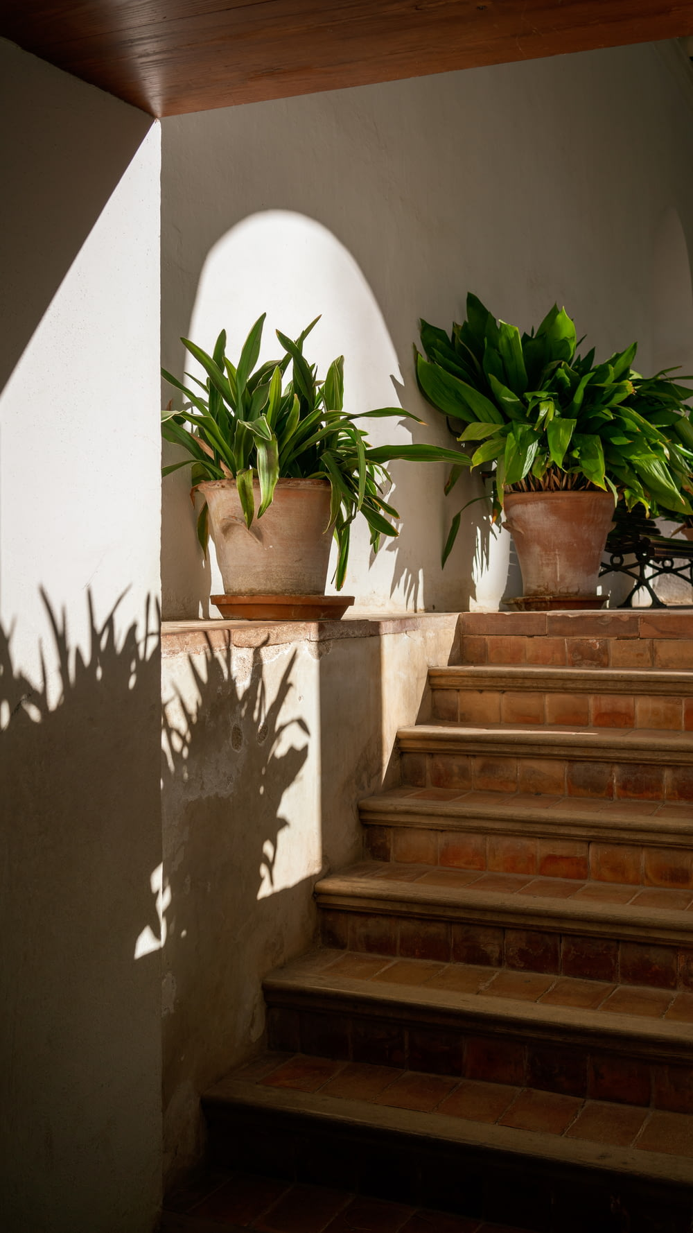 two green-leafed potted plants in the staircase