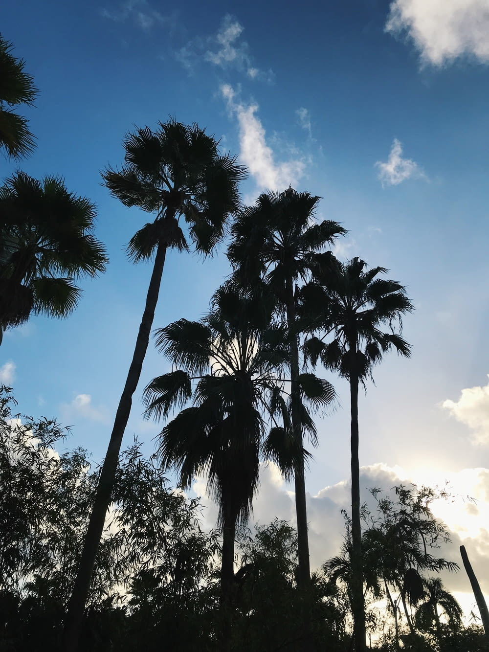 palm trees in forest