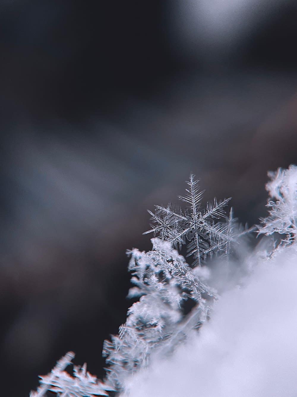snow covered tree during daytime