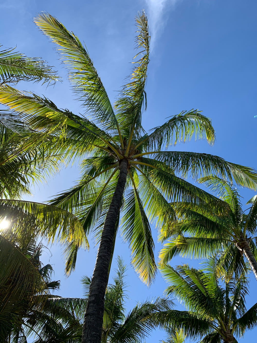green coconut palm tree under blue sky during daytime