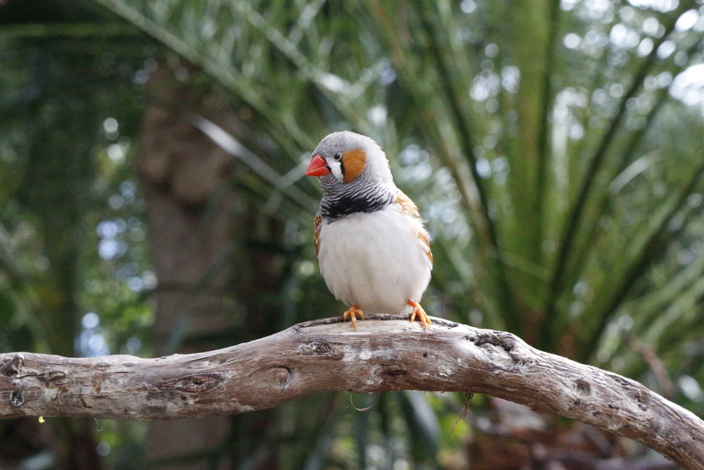 white and brown bird on brown tree branch