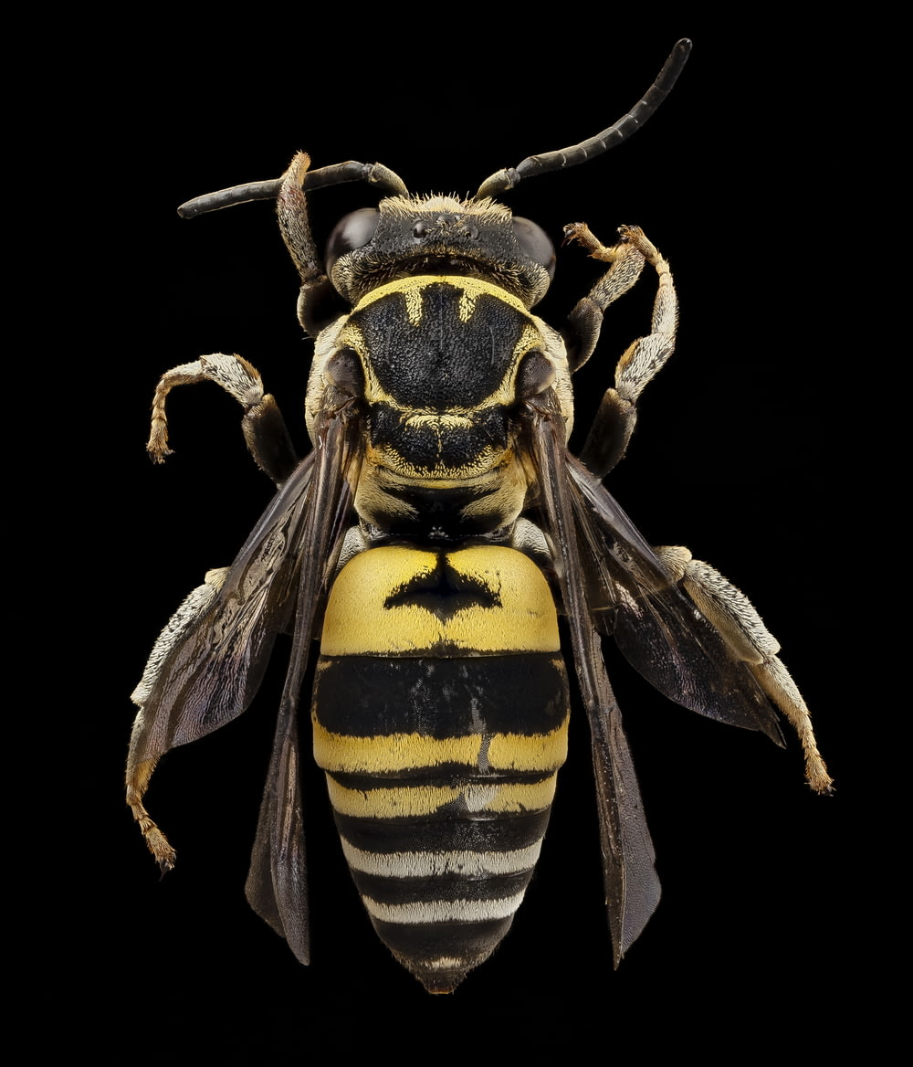 black and yellow bee illustration