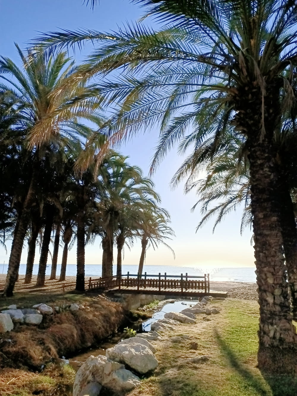 palm trees on beach shore during daytime