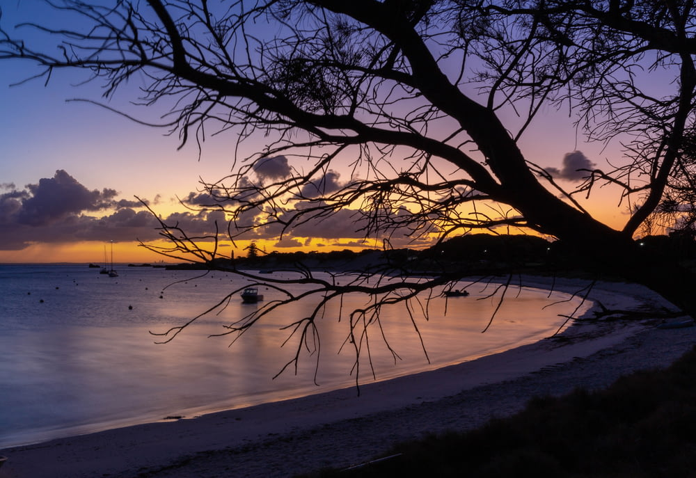 leafless tree on beach shore during sunset