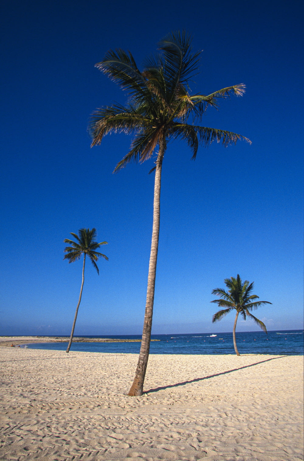 palm tree on white sand beach during daytime