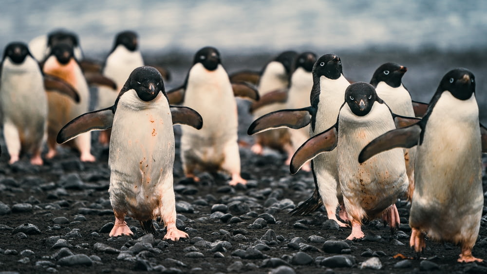 penguins on black sand during daytime