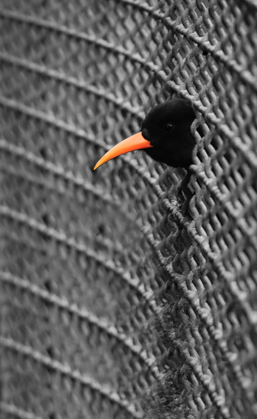 black and yellow bird on brown rope