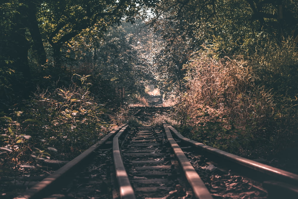 train rail between green trees during daytime