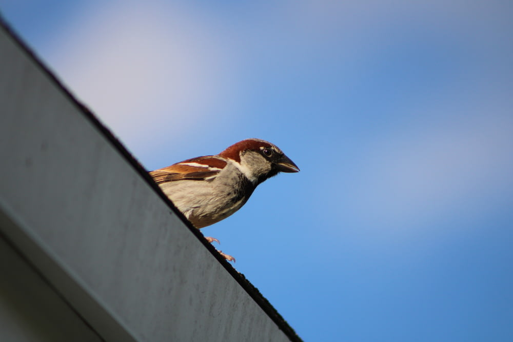 brown and white bird on black metal bar during daytime