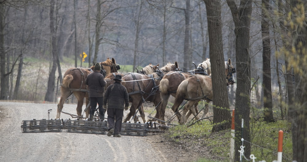 people walking on road with horses during daytime