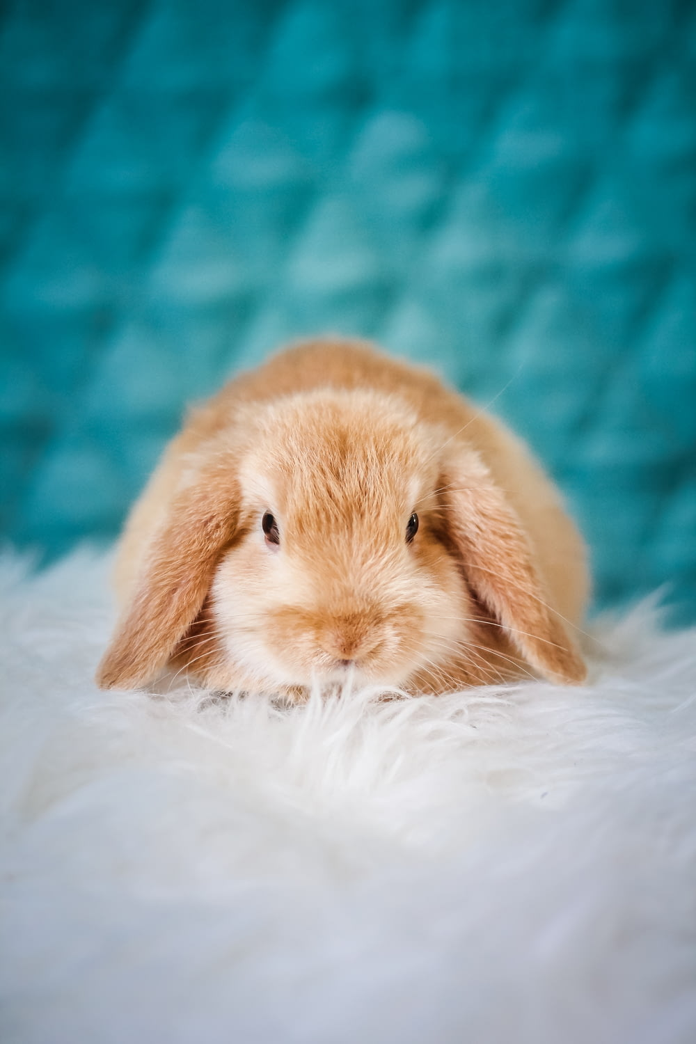 brown rabbit on white textile