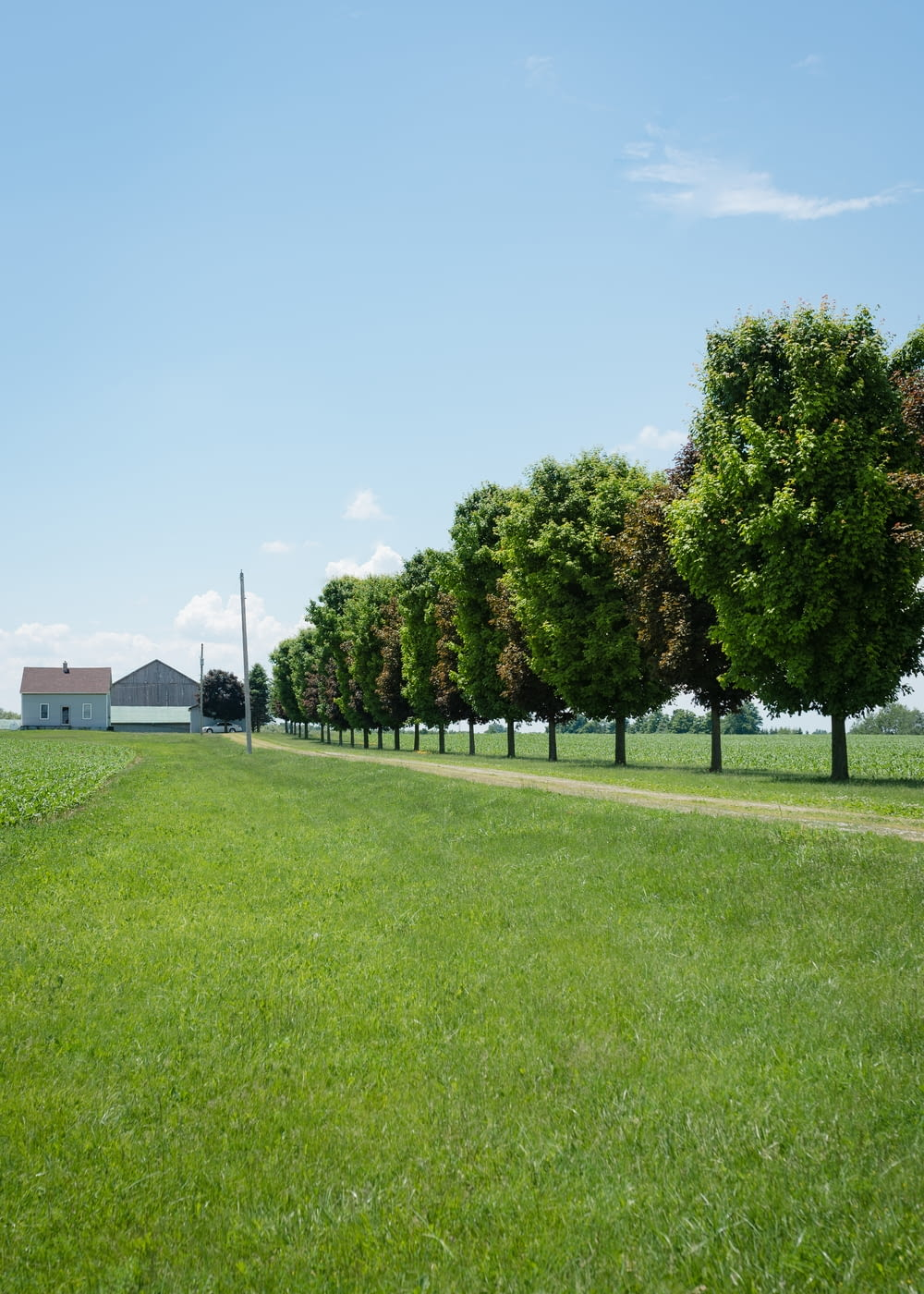 green grass field with trees and houses