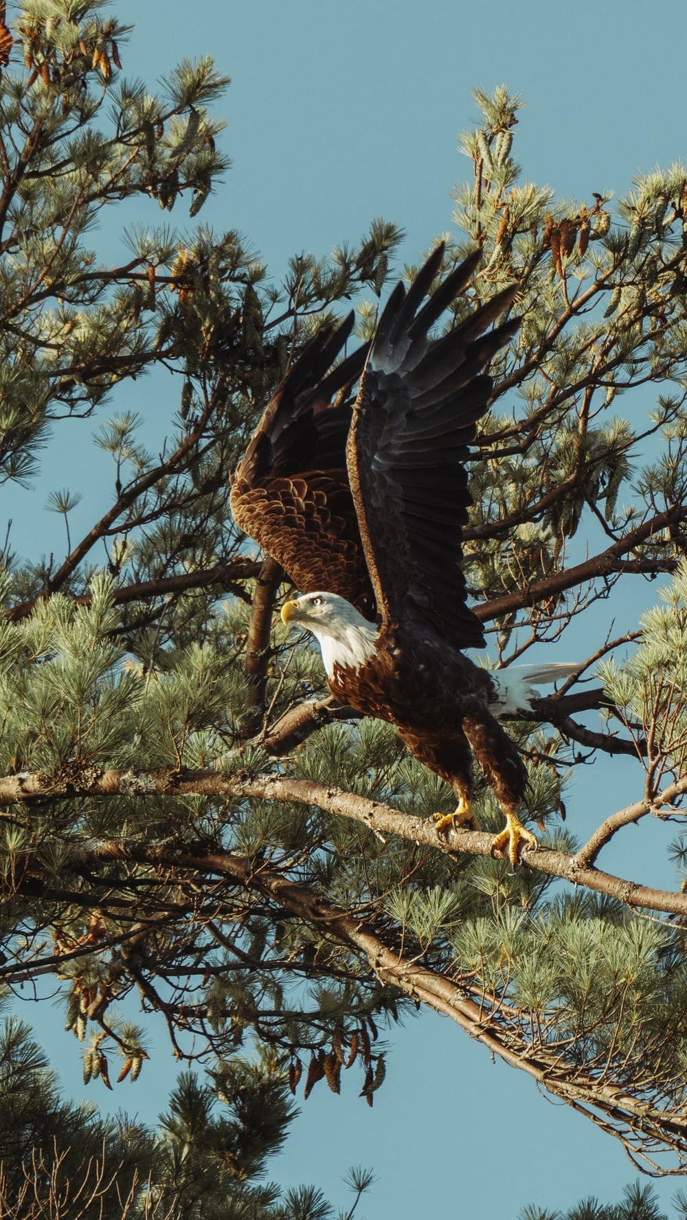 black and white eagle on brown tree branch during daytime