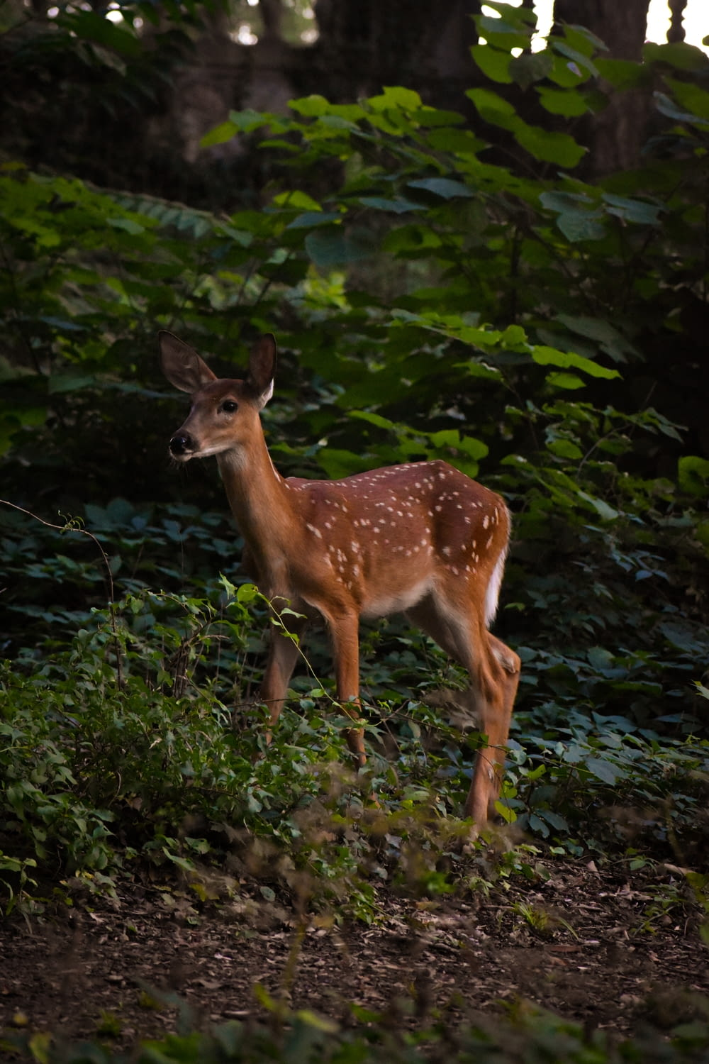 brown deer standing on green grass during daytime