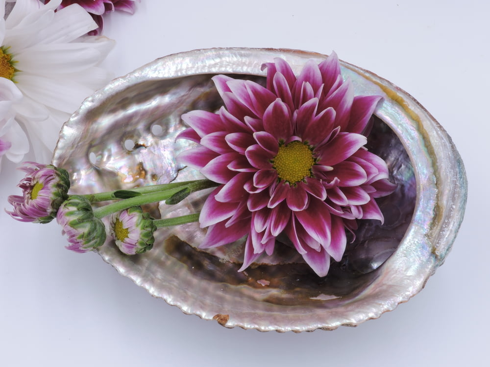 pink and yellow flower on stainless steel bowl