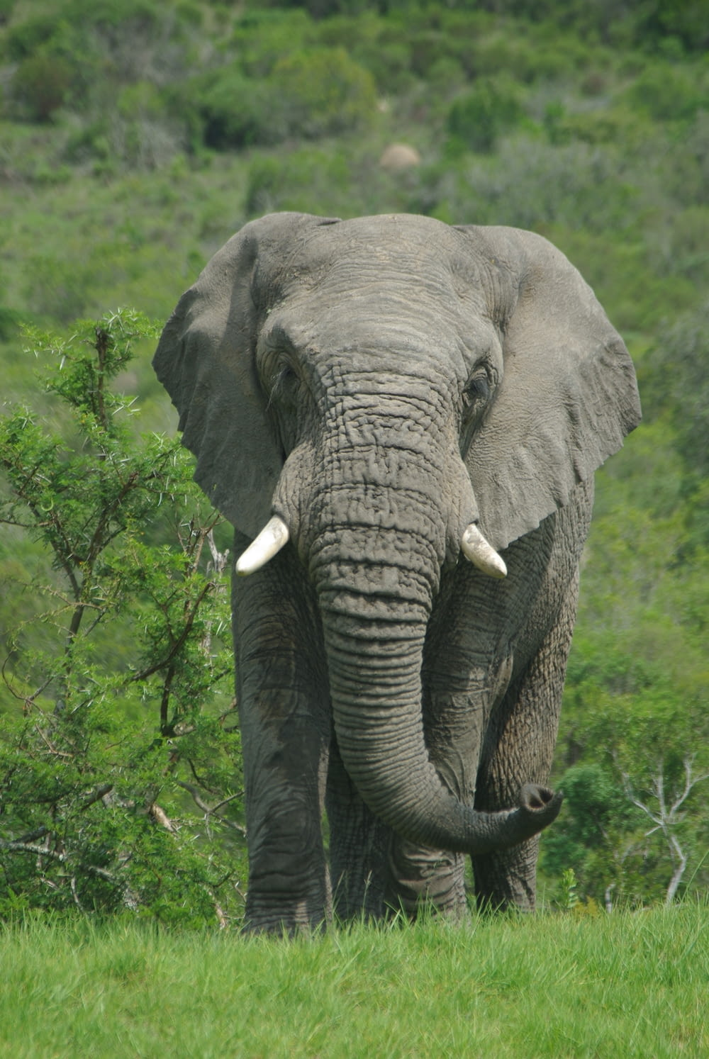 elephant standing on green grass field during daytime