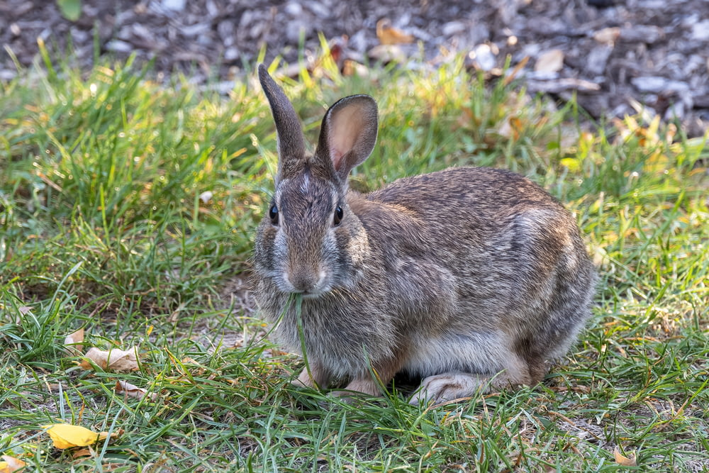 brown rabbit on green grass during daytime
