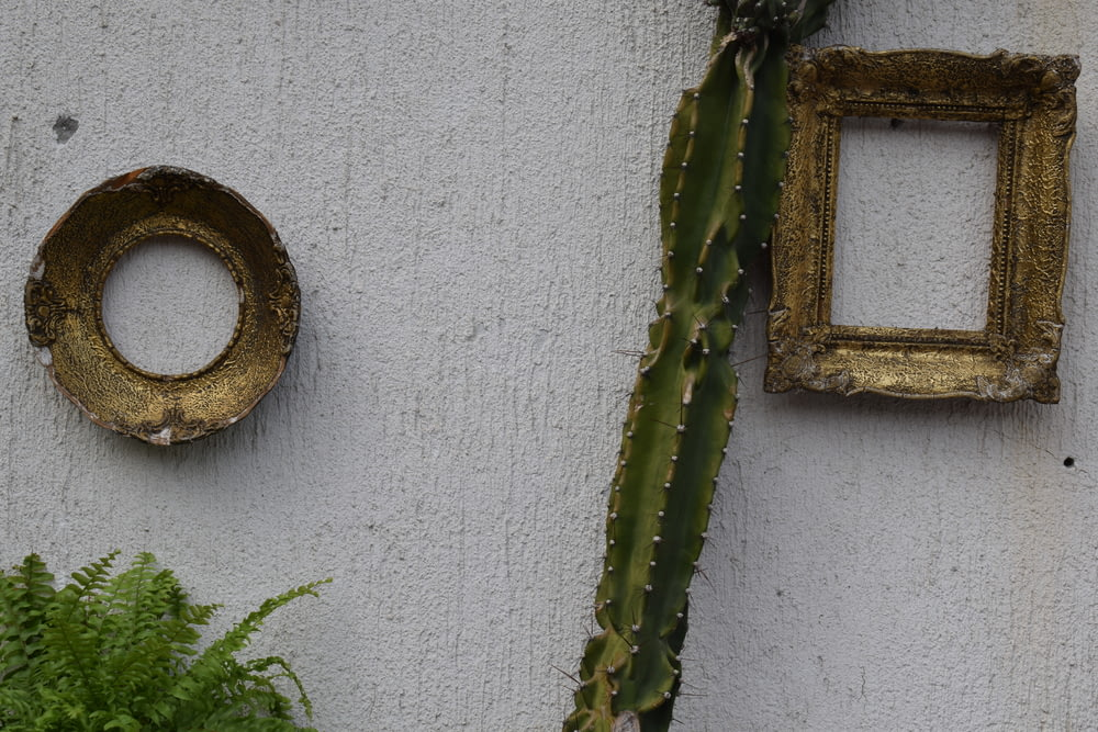 green cactus plant on brown wooden window