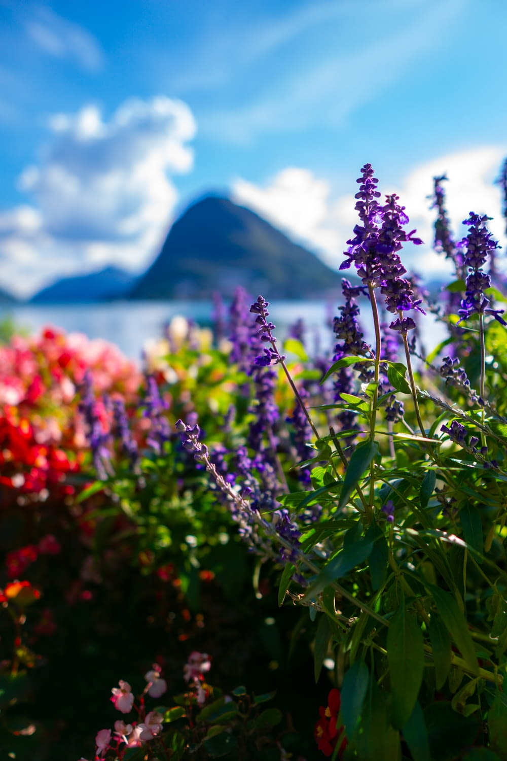 purple flowers near body of water during daytime