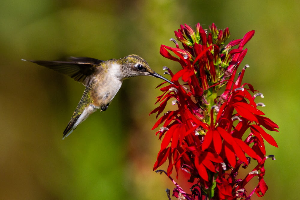 red and green bird flying near red flowers
