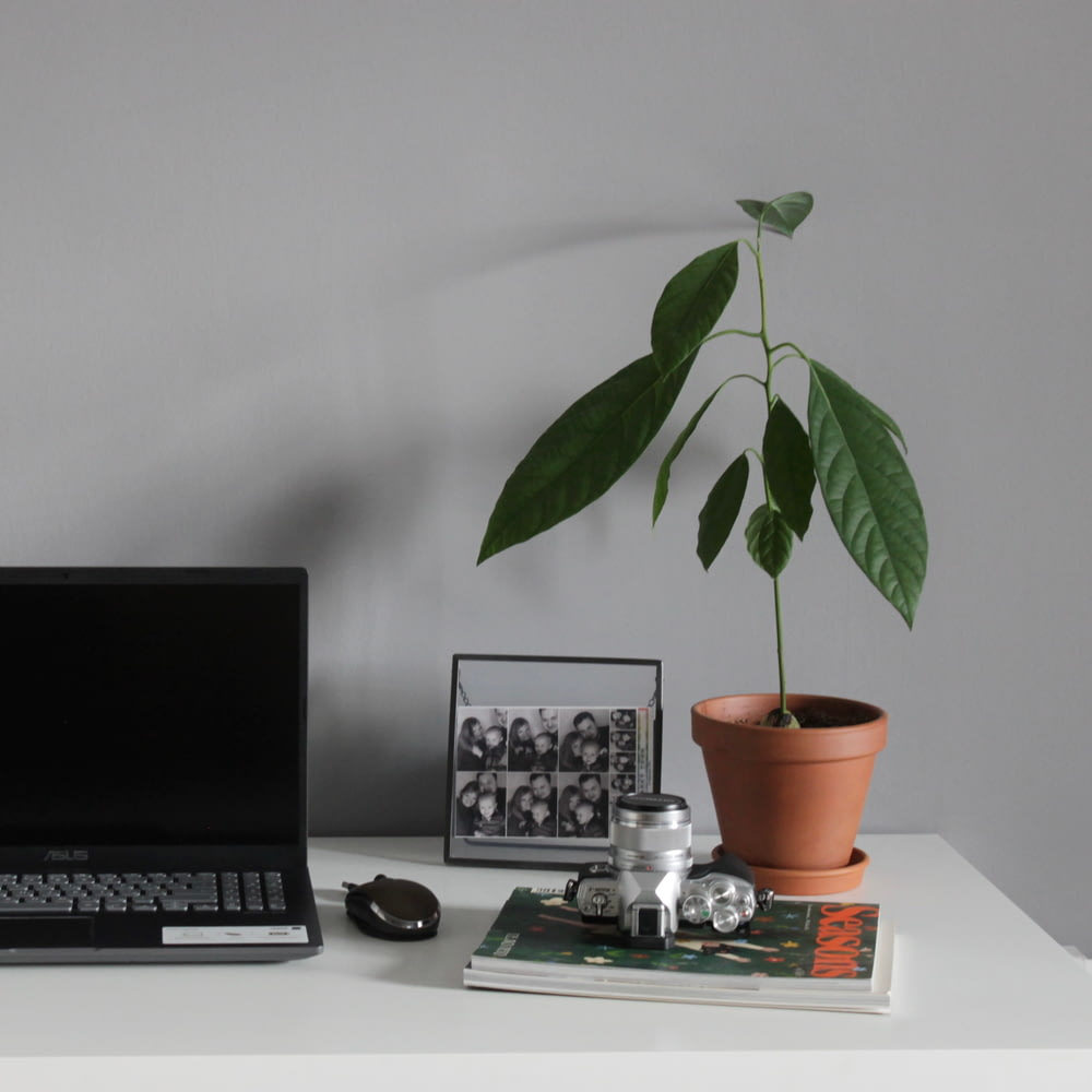 black and silver laptop computer beside green plant