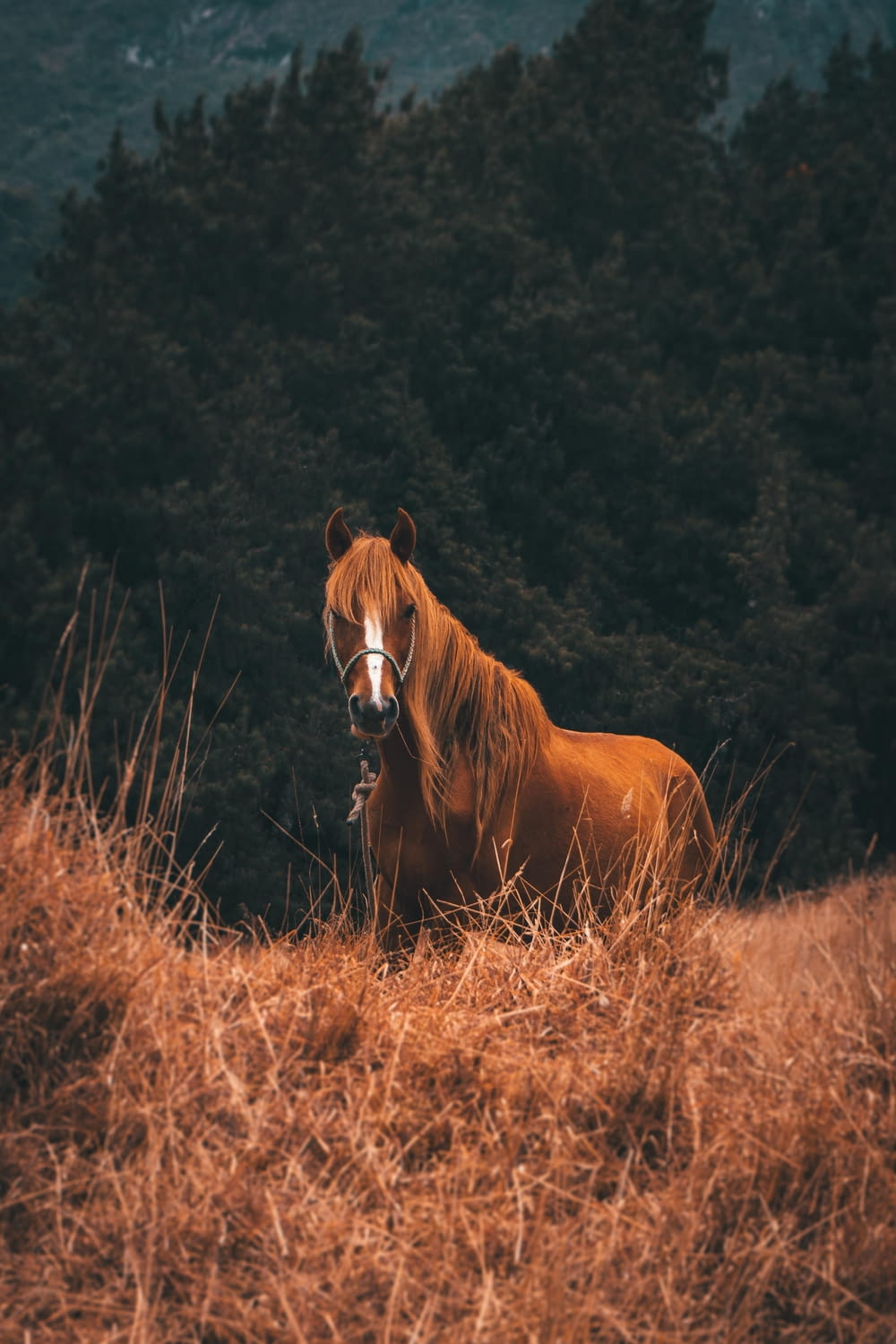 brown horse on brown grass field during daytime