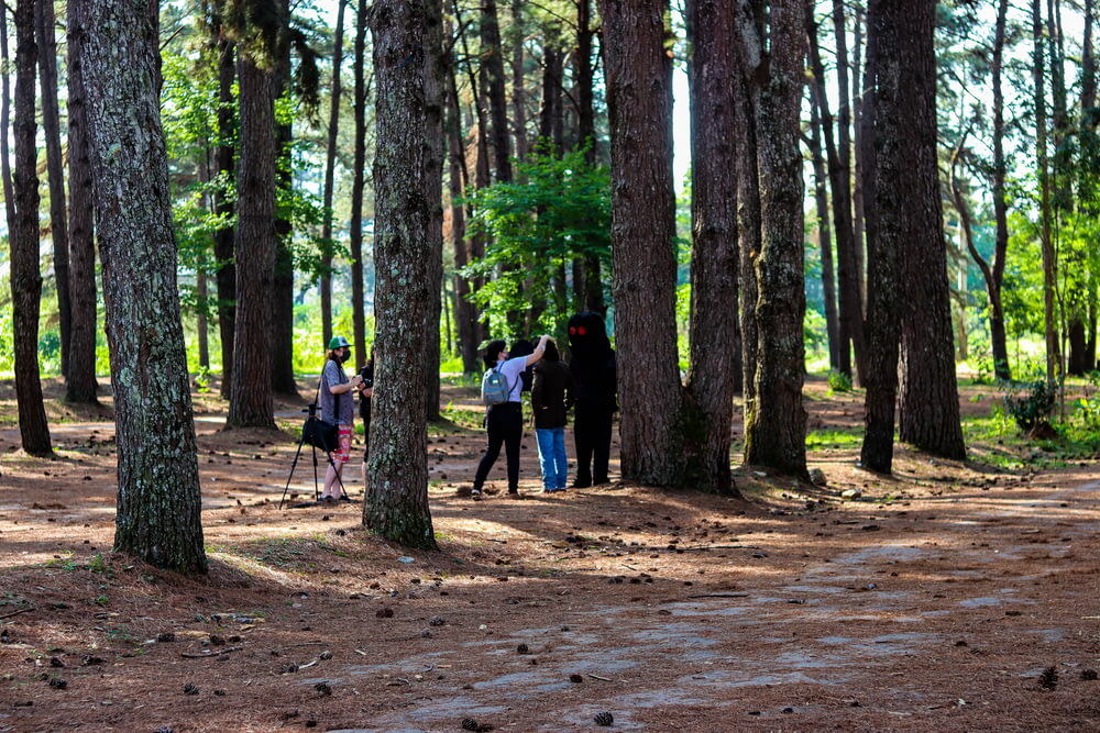 people walking on dirt road surrounded by trees during daytime