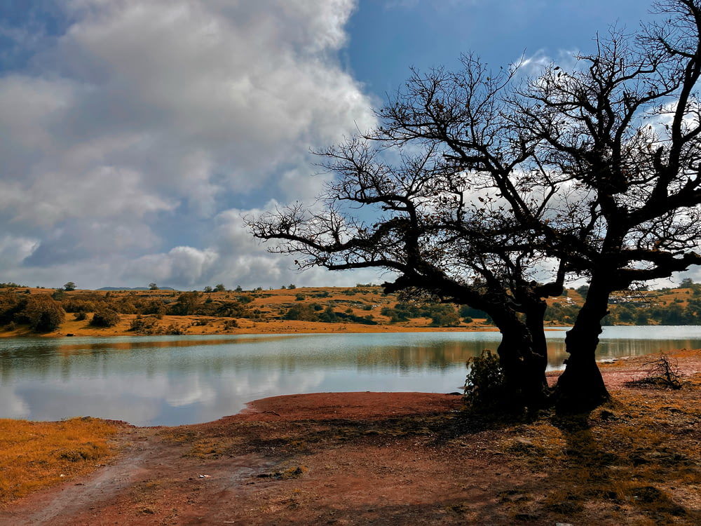 leafless tree near lake under cloudy sky during daytime