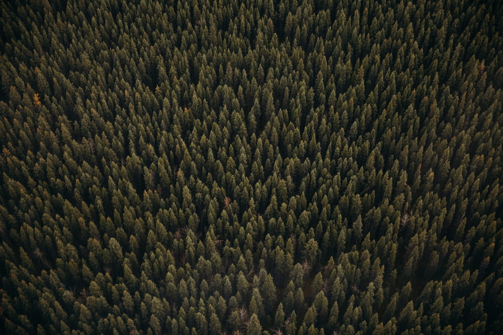 green and brown pine trees